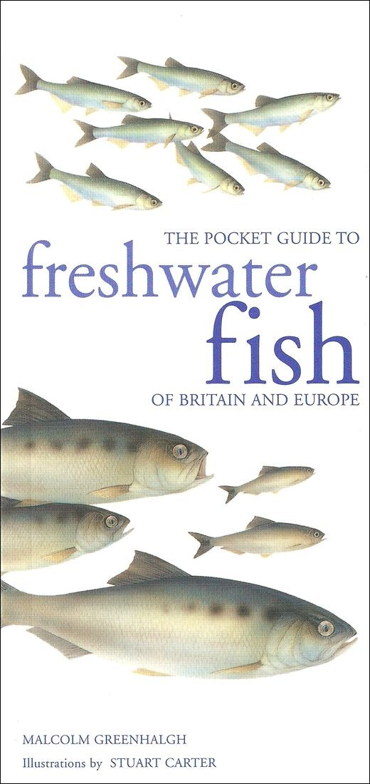 Greenhalgh, Malcolm,Stuart Carter – The pocket guide to freshwater fish of Britain and Europe